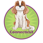 Cavalier King Charles-Connecticut
