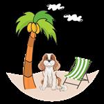 Cavalier King at the beach