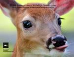2020 PA Wildlife Samaritans Calendar