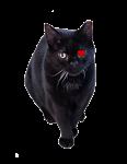 Sammie Cat Heart
