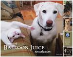 New The Pets of Balloon Juice Calendar 2020