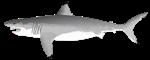 Biting Great White Shark
