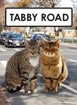 Tabby Road 1
