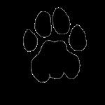 Puma Mountain Lion Track