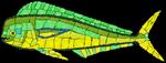Mosaic Fish Mahi