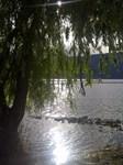 Lake's Edge