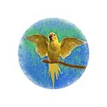 Lutino Ringneck Parakeets