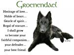 Belgian Sheepdog_Groenendael Dog Breed Gifts