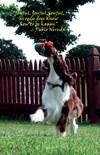 Joyful Joyful Joyful Only Dogs Know How H