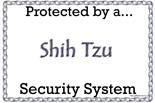 Beware Shitzu