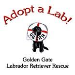 Golden Labrador Retriever Mouse Pad