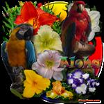 Aloha Hawaii Parrots