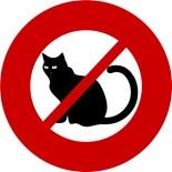 Anti Cats