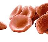 Erythrocytes