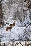Resting Trees Habitats Nature Animals Wil