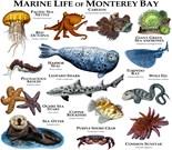 Monterey Marine Life