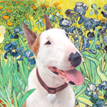 IRISES &<br>a Brown/White Bull Terrier