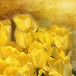 Watercolor Yellow Tulips with Chevron