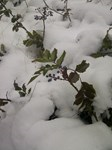 Winter Photo Art