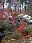 Fall Photo Art