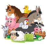 Farm Animal