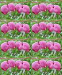Pink Heart Bells