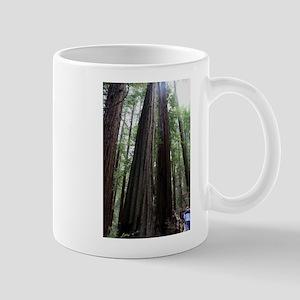 Muir Woods, California Mug