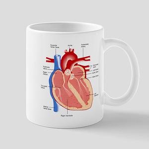 Human Heart Anatomy Mug