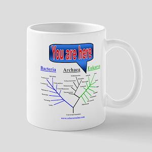 Evolutionary Tree Mug