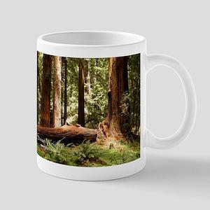 Muir Woods Magic Mugs
