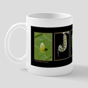 metamorph wp21 Mug