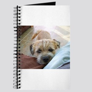 border terrier begging Journal