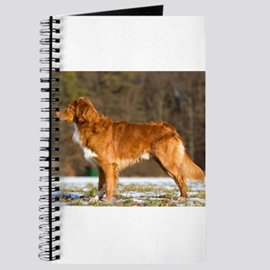 nova scotia duck tolling retriever full Journal