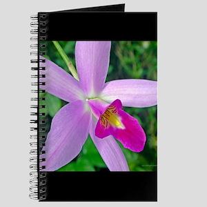 Cattleya Labiata Notebooks Cafepress