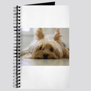 Yorkshire Terrier laying flat Journal