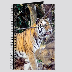 Tiger in the woods Journal