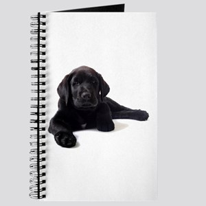 Labrador Retriever Journal
