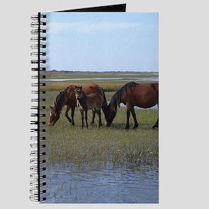 Shackleford Ponies Journal