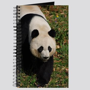 Giant Panda Bear Strutting His Stuff Journal