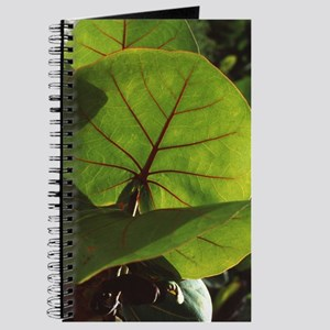 Seagrape leaves Journal