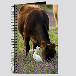Cattle and cattle egrets Journal