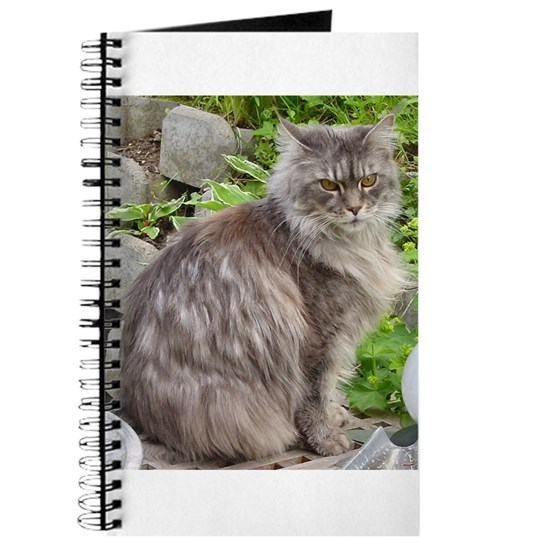 maine coon sitting 2