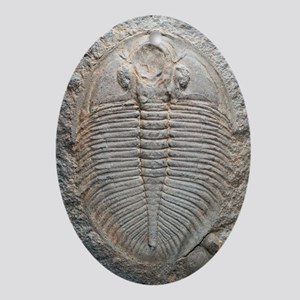 Trilobite fossil Oval Ornament