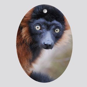Red Ruffed Lemur iPad Mini Oval Ornament
