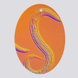 C. elegans worm - Oval Ornament