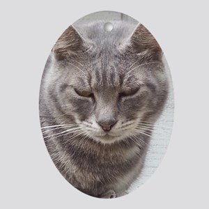 Gray Tabby Cat Oval Ornament