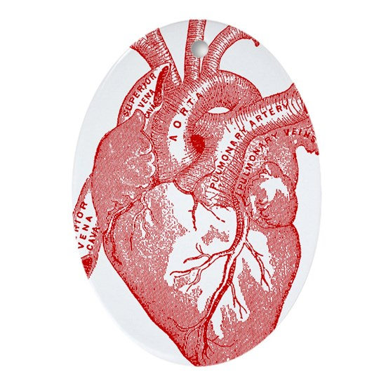 Anatomical Heart - Red