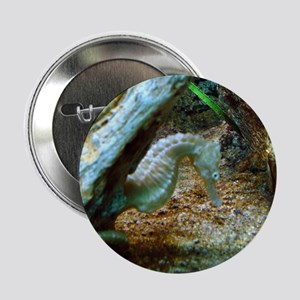 "Sea Horse 2.25"" Button"