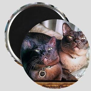 Burmese cat siblings, 2 Magnet