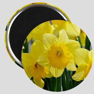 Trumpet Daffodil Magnet